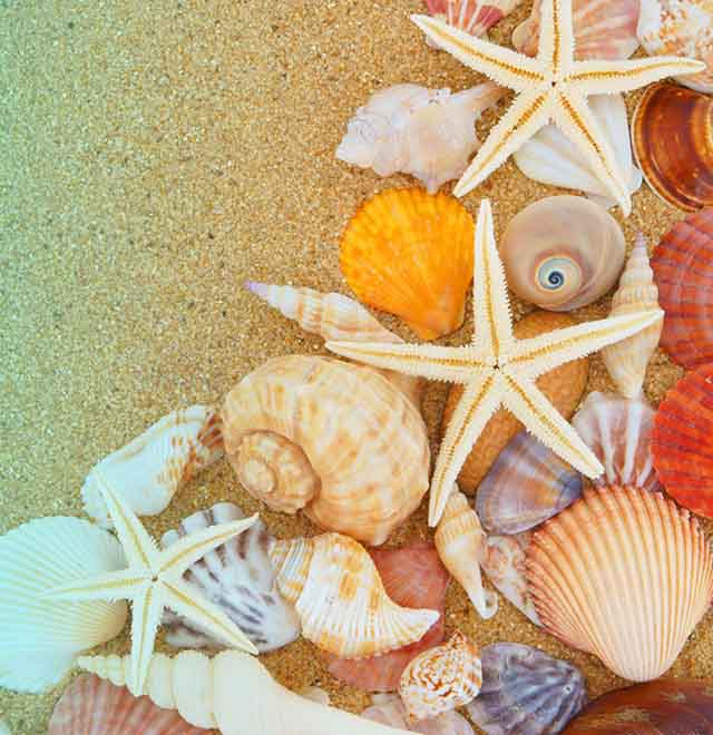 Fresh Passion: profumazione marine